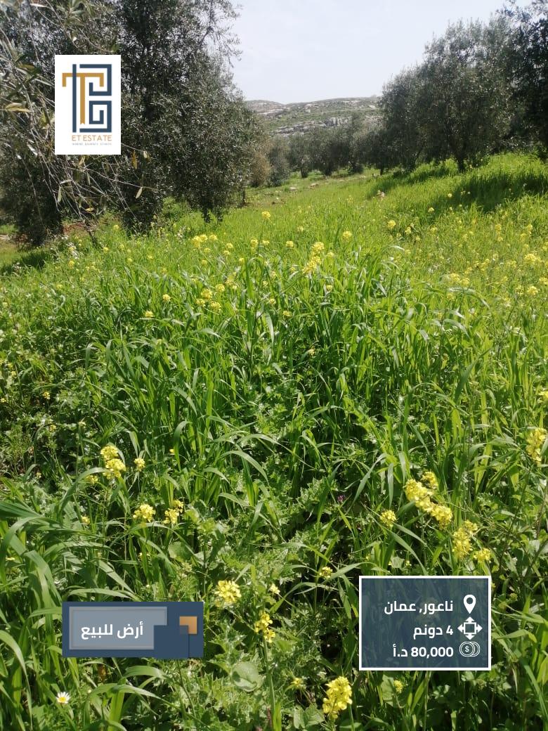 أرض زراعية للبيع في ناعور